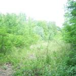 Takto vypadal pozemek před zahájením jednání o jeho pronájmu (pohled ze zadní části)